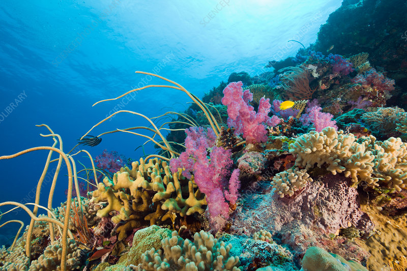 Reef with Sea Whips and Soft Corals
