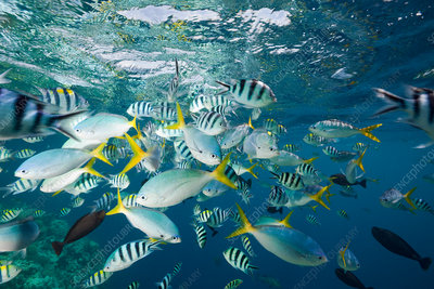 Colourfully schooling Fish