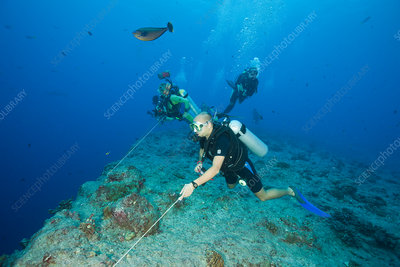 Diver use Reef Hook in Current