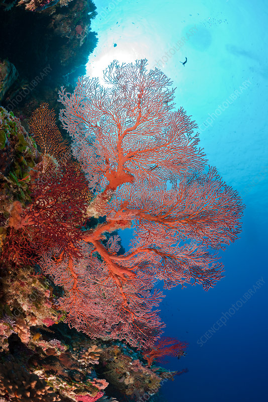 Reef with Sea Fan