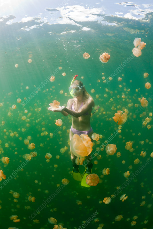 Skin Diving with harmless Jellyfish