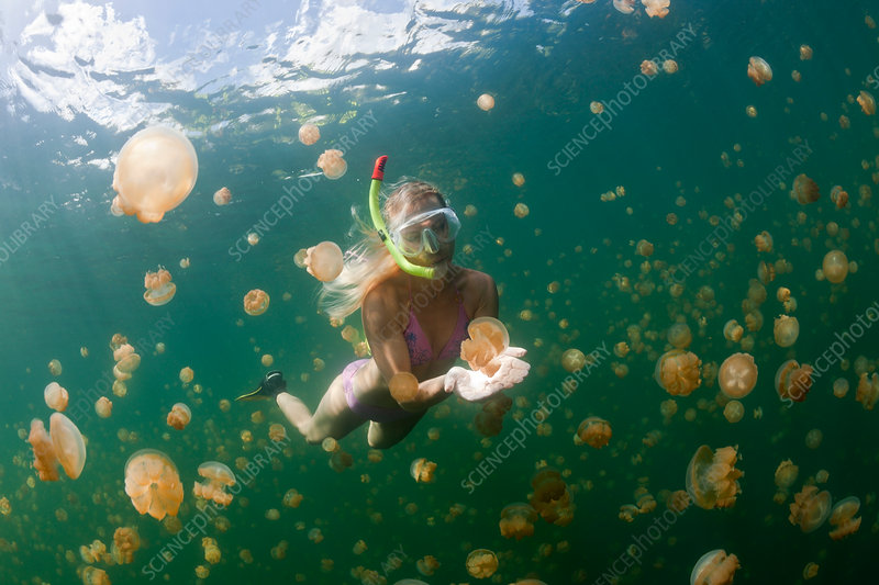 Snorkelling in Jellyfish Lake