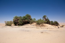 Oasis Ain Khadra near White Desert National Park