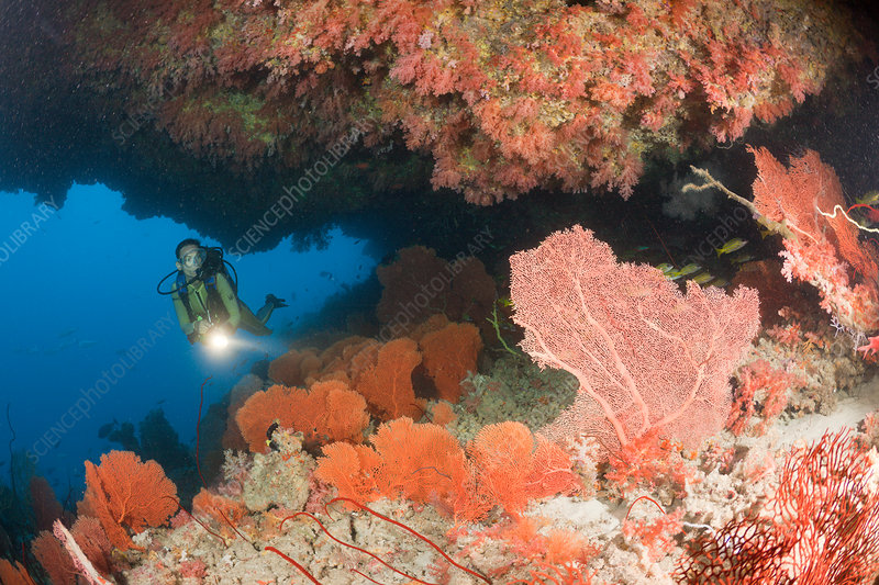 Overhang with Sea Fan and Diver