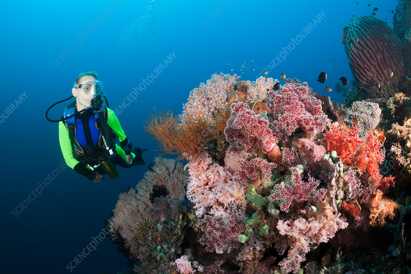 Scuba Diving at Bali