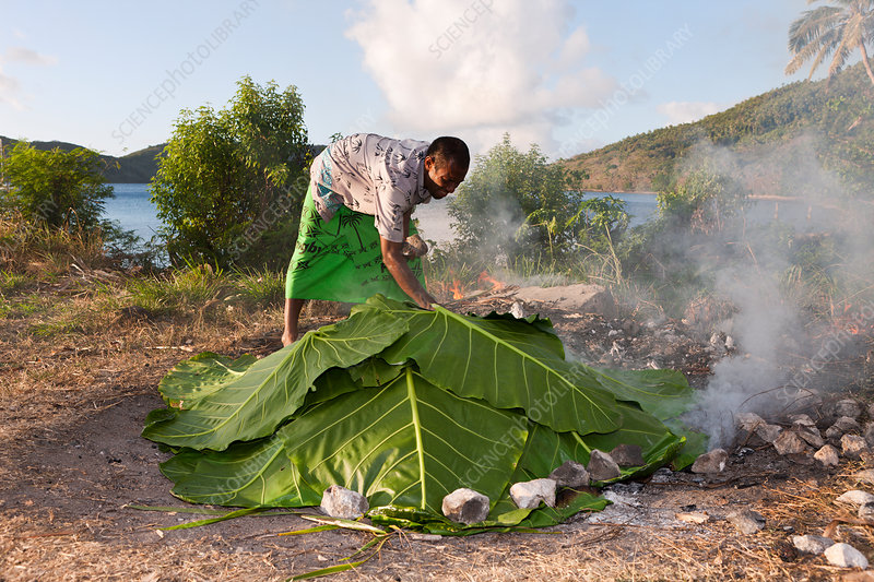 Natives cooking with Lovo Oven