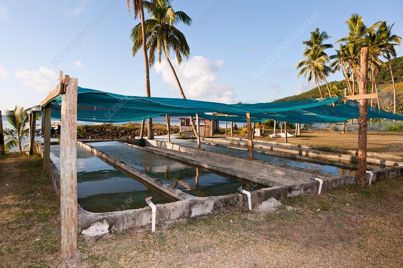 Giant Clam Farm