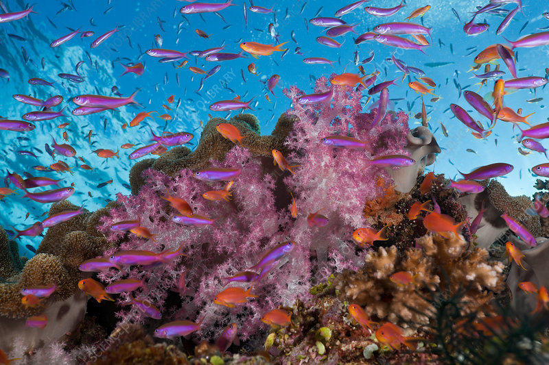 Colourful Coral Reef