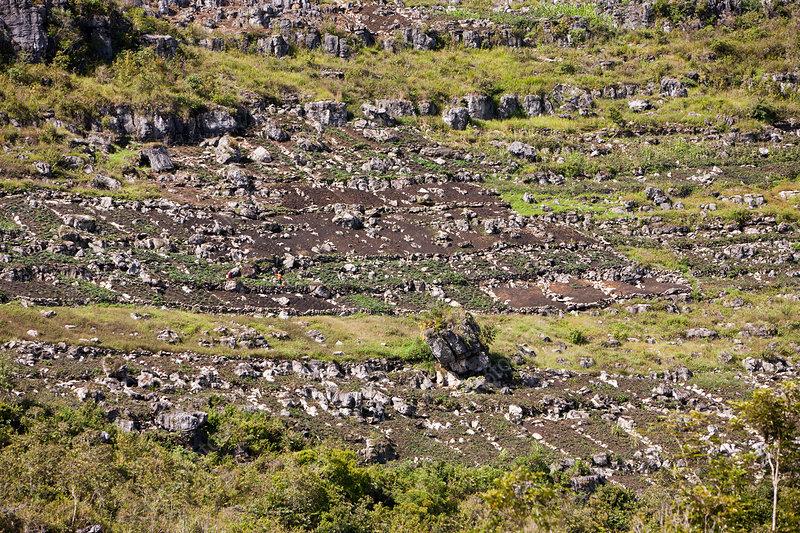 Typical terrace fields of baliem valley stock image c031 for Terrace farming model
