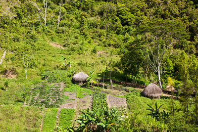 Traditional Dani Village at Baliem Valley