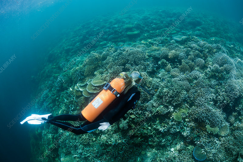 Scuba Diver over Reef Top