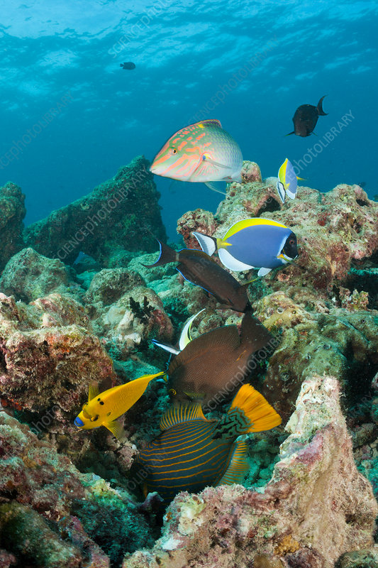 Coralfishes at Reef Top