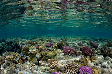 Corals growing on Reef Top