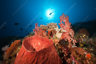 Coral Reef with Barrel Sponge
