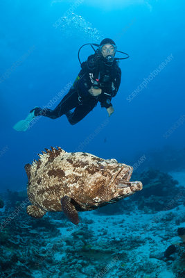 Scuba Diver and Flowery Grouper