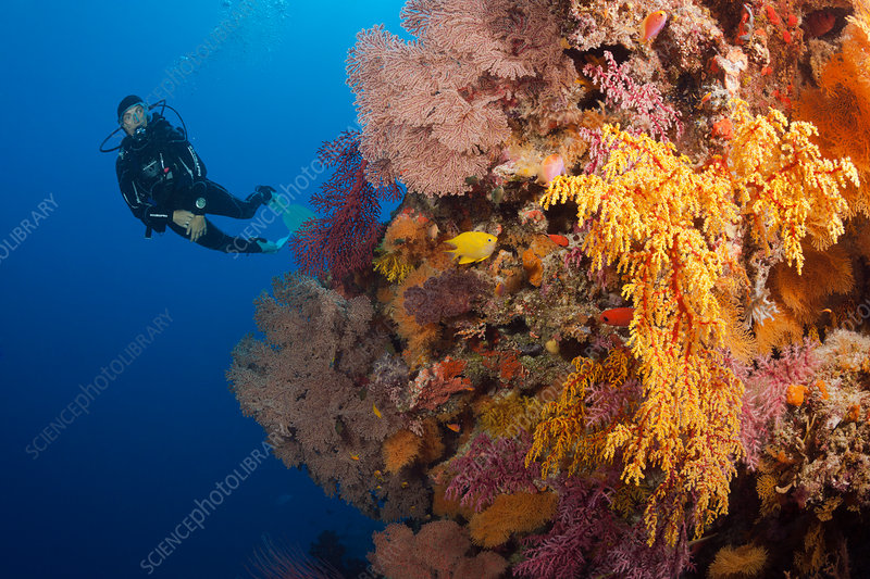 Scuba Diver over Coral Reef