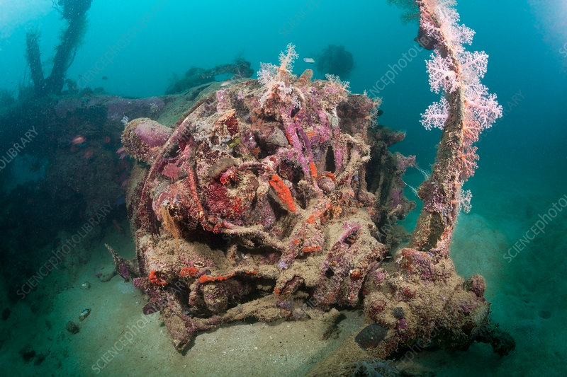 Radial Engine of Dauntless Dive Bomber Wreck