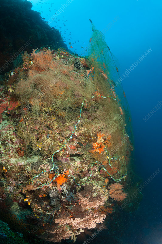 Lost Fishing Net covers Coral Reef