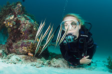 Diver and Shoal of Razorfish