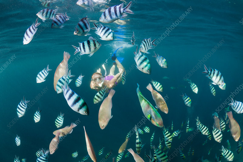 Freediver and Shoal of Sergants