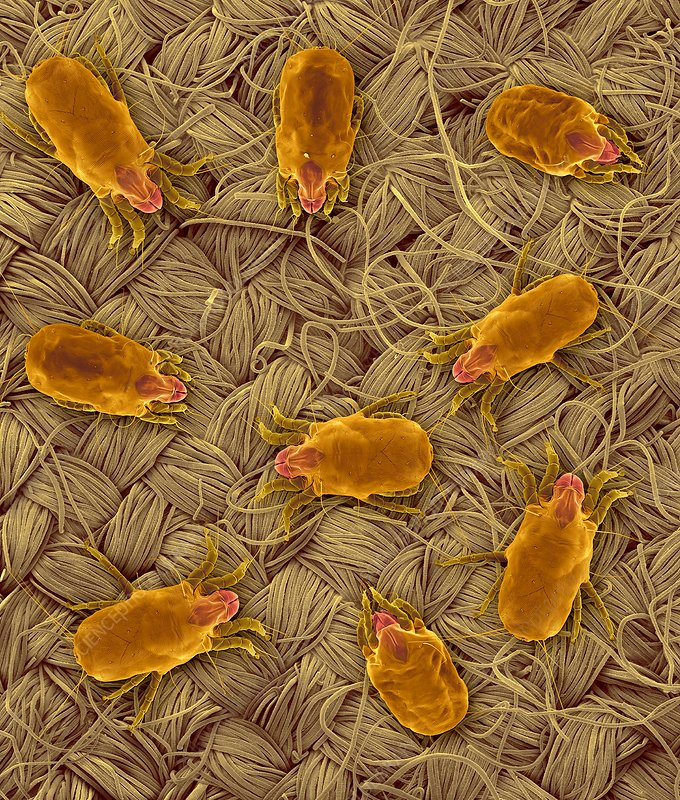 Dust Mites on Fabric, SEM