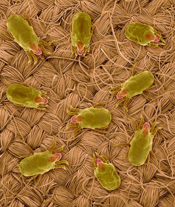 Dust mites on wool fabric, SEM