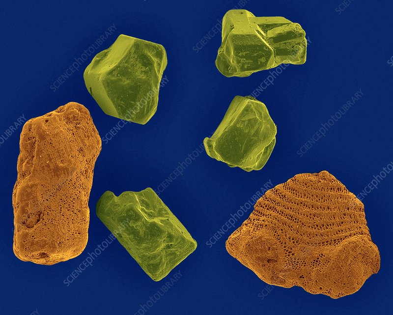 Beach sandcoral and rock, SEM