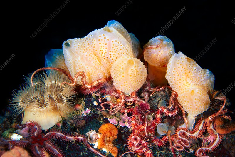 Sponges and marine animals