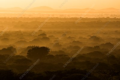 Sunrise over sand forest