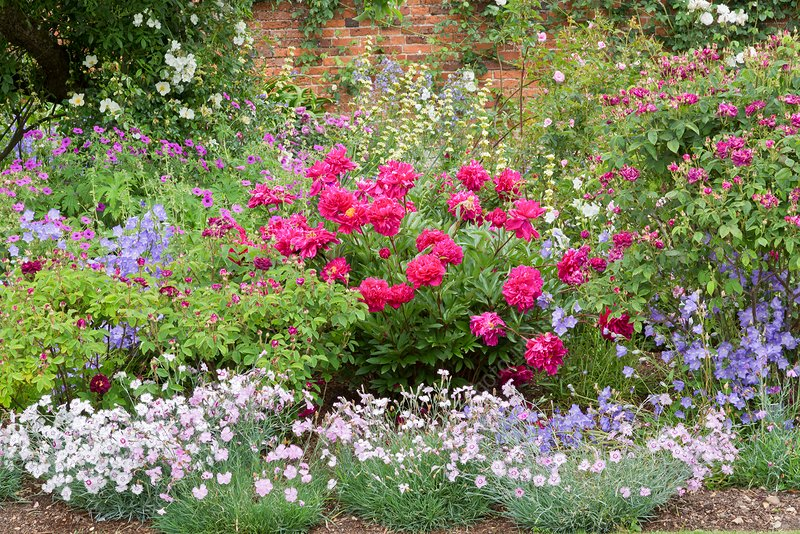 Walled garden in bloom