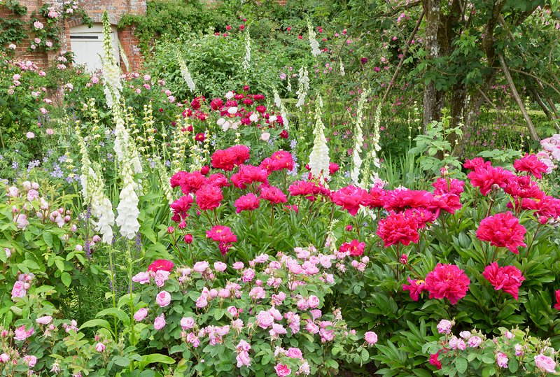Walled garden in bloom