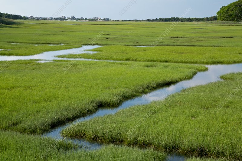Saltmarsh drainage ditches