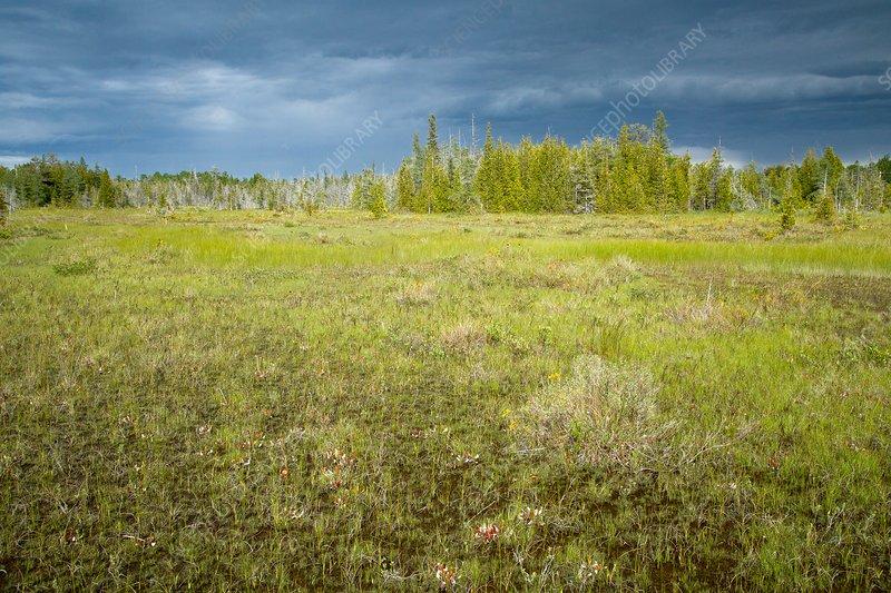 Dorcas Fen, Bruce Peninsular National Park, Canada