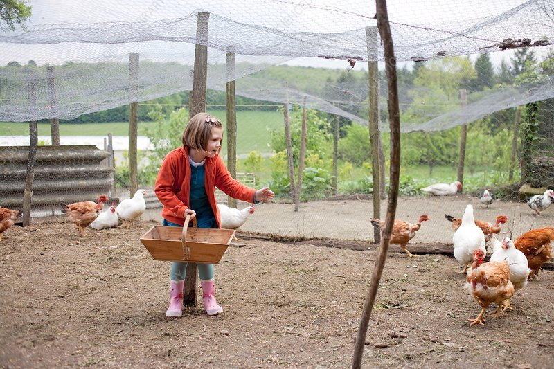 Girl in a hen house