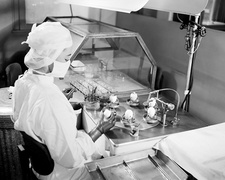 Egg-based typhus research, 1947
