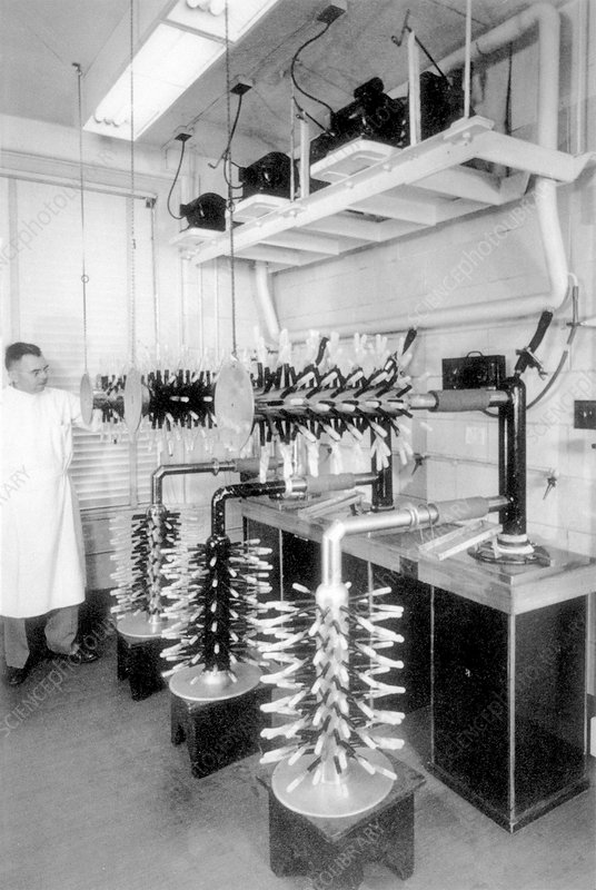 Yellow fever vaccine production, 1940
