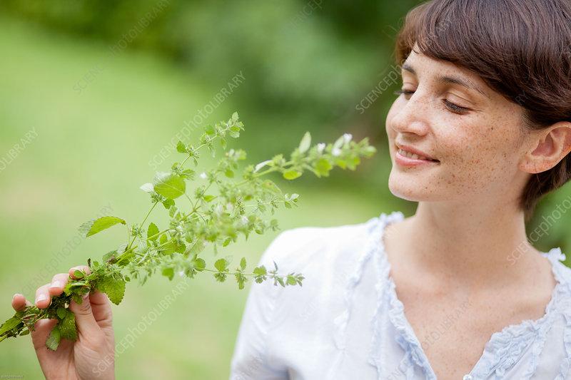 Woman picking lemon balm