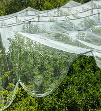 Netted apple orchard in Provence