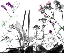 Roadside animals and flowering plants, X-ray