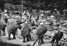 Performing Elephants, Ringling Brothers