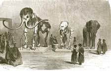 Mammoth and Elephants