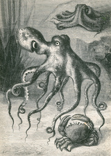 Octopi and Crab, 1833