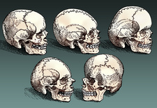 Normal and Abnormal Skulls, 16th Century