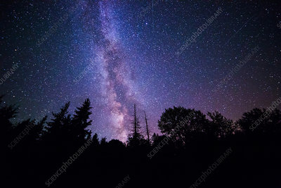 Milky Way over Evergreen Forest