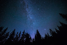 Northern Milky Way and Forest