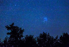 Pleiades and Trees