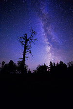 Dead Pine and Milky Way