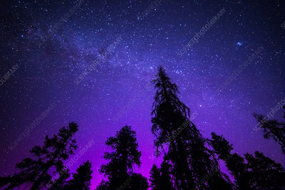 Milky Way Aurora and Pines