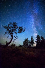 Milky Way and Small Tree Central OR 2
