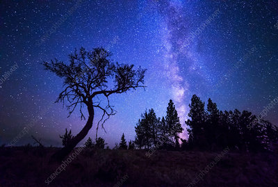 Milky Way and Small Tree, Oregon